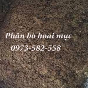 phan-bo-hoai-muc