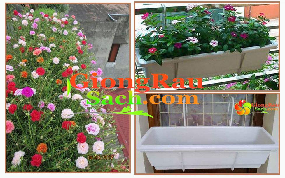 Chau-hoa-dai-thong-minh1