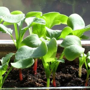 Cải tạo đất trồng rau