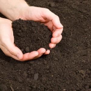 Đất trồng rau trồng hoa giá rẻ mà giàu dinh dưỡng