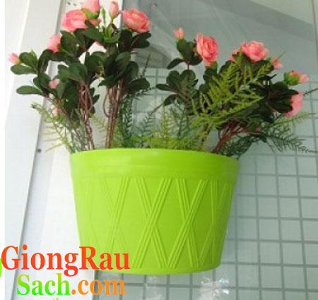 chau-nhua-op-tuong-co-nho-mau-xanh-com