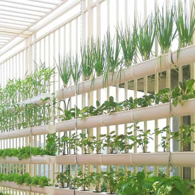Áp dụng dung dịch trồng cây thủy canh giàn treo