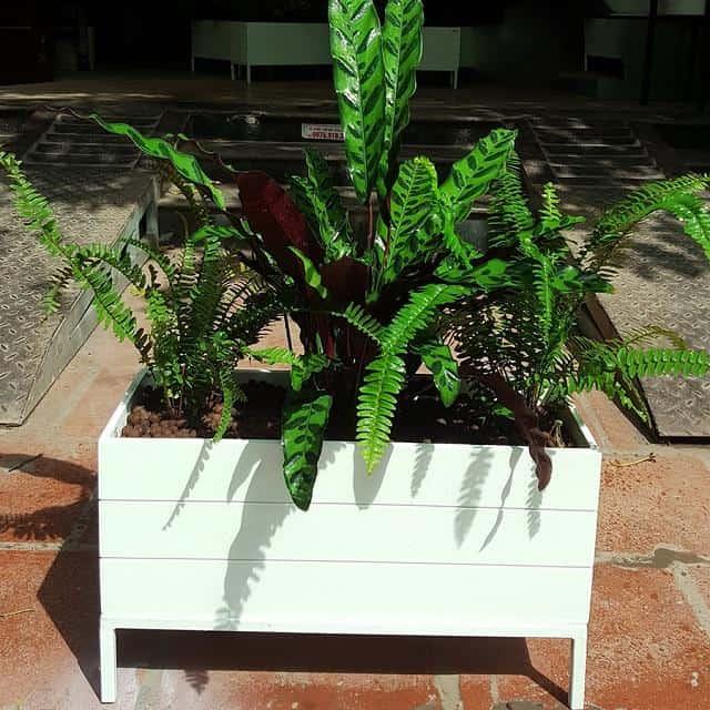Chậu trồng cây bằng nhựa dễ vệ sinh, lau chùi