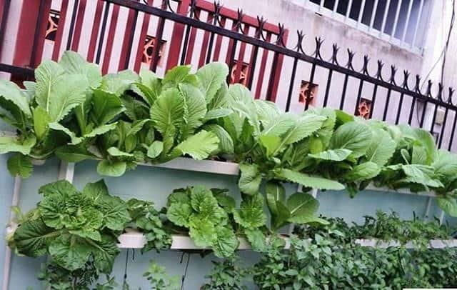 Giá kệ trồng rau sạch