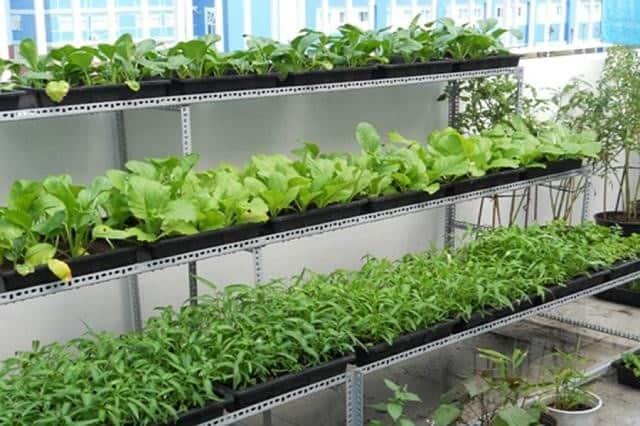 Giá trồng rau sạch dạng tầng