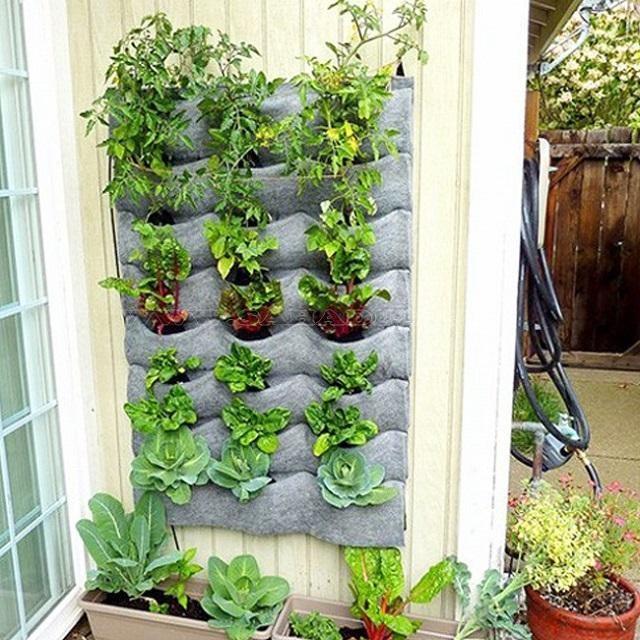 Giá trồng rau sạch dạng treo tường