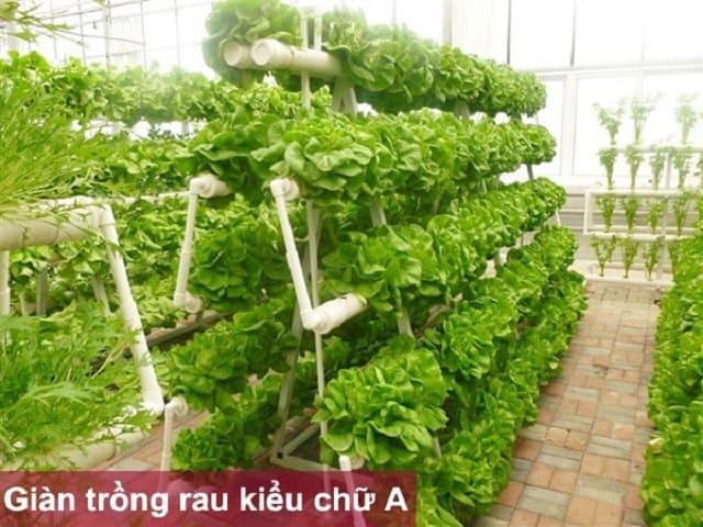 Giàn trồng rau thủy canh mô hình chữ A