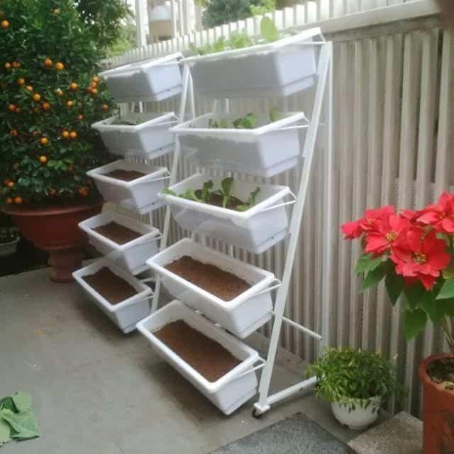 Kệ trồng rau sạch tại nhà tiết kiệm không gian