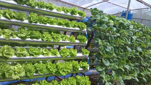 Trải nghiệm phương pháp trồng rau thủy canh
