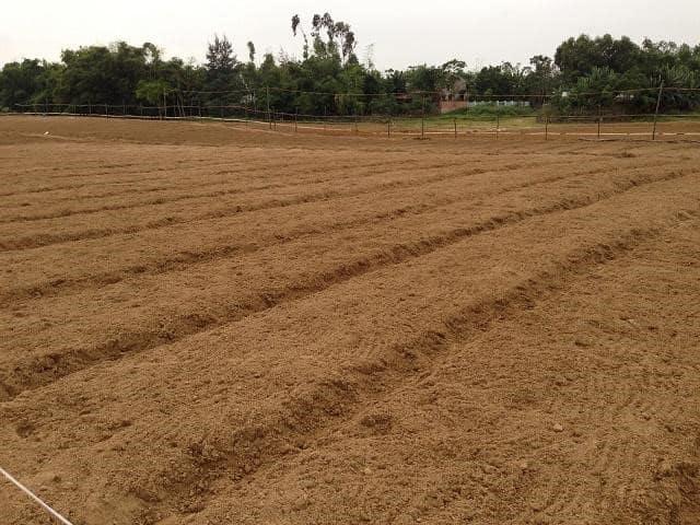 Cải tạo đất trồng là việc cần làm để nâng cao năng suất cây trồng