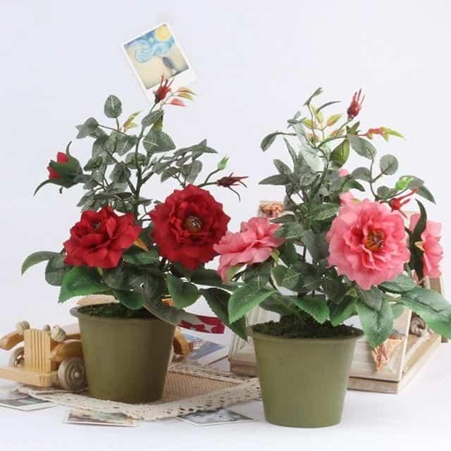 Chiều cao của chậu trồng hoa cần phù hợp với chiều cao của cây hoa.