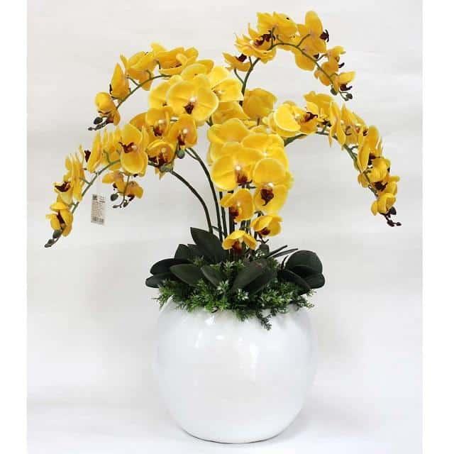 Chọn chậu trồng hoa cần căn cứ vào chiều cao của cây, mục đích nuôi dưỡng cây