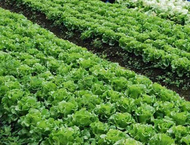 Để có một vườn rau sạch và năng suất bao gồm nhiều yếu tố