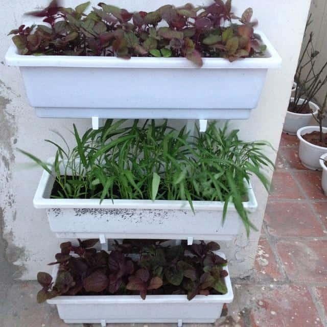Để sở hữu vườn rau sạch đáp ứng đầy đủ nhu cầu gia đình cần lưu ý về khay, kệ, đất và giống cây trồng.
