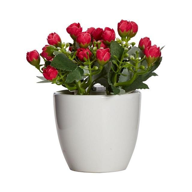 Để thỏa mãn thú chơi hoa, bạn có thể lựa chọn chậu hoa từ nhiều chất liệu khác nhau.