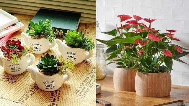 Lựa chọn chậu nhựa để trồng hoa cần căn cứ vào kích thước của chậu