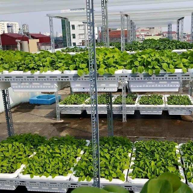 Kệ trồng rau sạch có nhiều ưu điểm vượt trội, đa dạng kiểu dáng