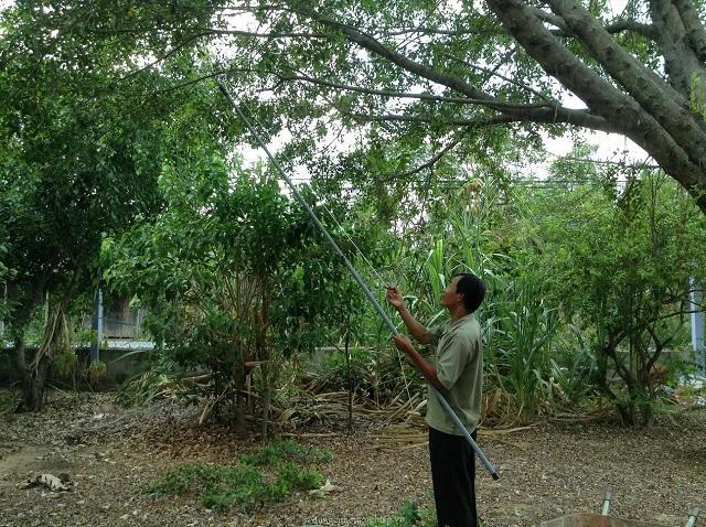 Nên chọn kéo cắt cành cây phù hợp với nhu cầu và mục đích sử dụng