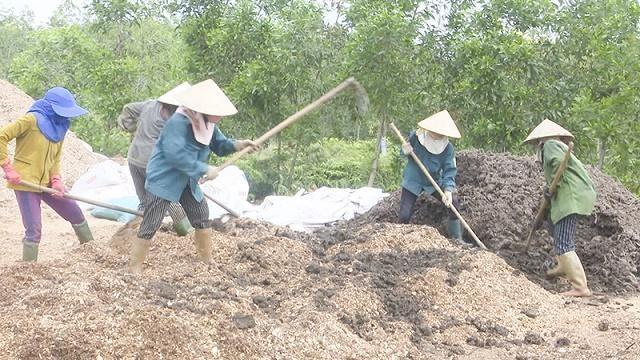 Sử dụng phân hữu cơ để cải tạo đất là phương pháp an toàn và hiệu quả cho cây trồng