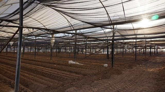 Thực hiện quy trình làm đất là vấn đề không thể bỏ qua khi bạn muốn trồng rau