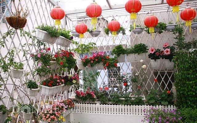 Trồng hoa trong chậu cần chú ý đến môi trường: nhiệt độ, ánh sáng, gió,…