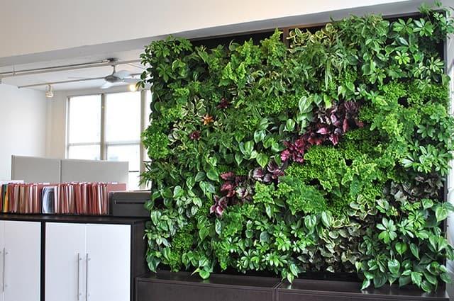 Hệ thống tưới nhỏ giọt tưới bức tường cây xanh