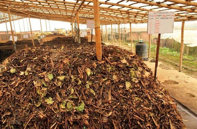 Cách sử dụng nấm trichoderma ủ phân chuồng