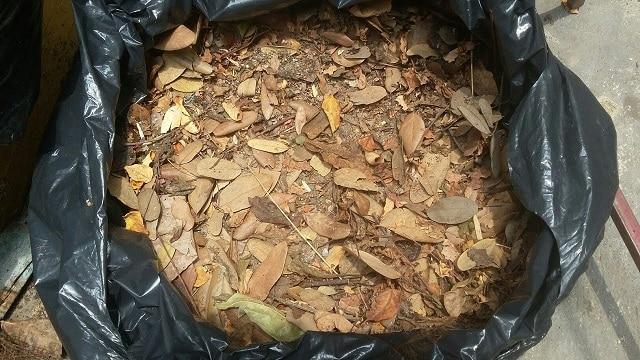 Cách ủ lá cây khô