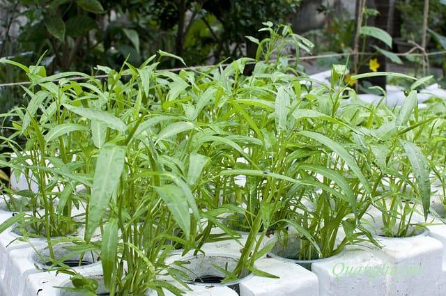 Cải tạo đất giúp cây có đầy đủ chất dinh dưỡng