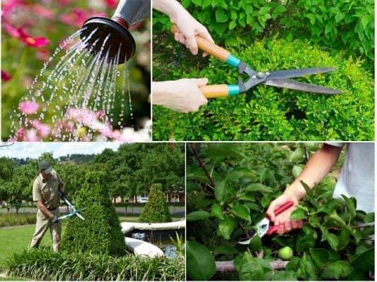 Chăm sóc vườn cây