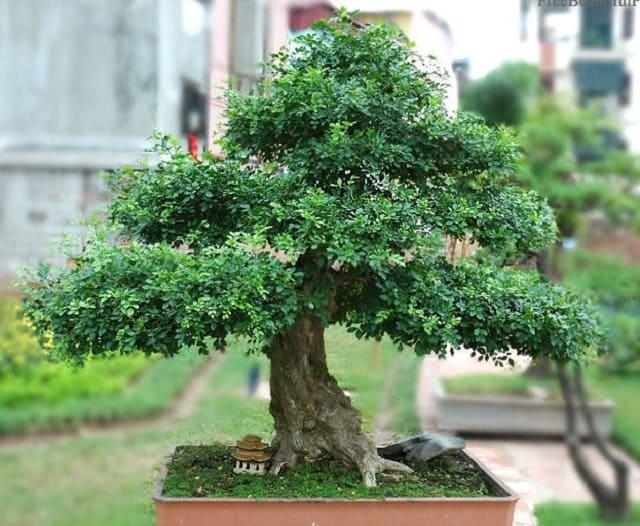 Chọn đất tốt cho cây luôn xanh tươi