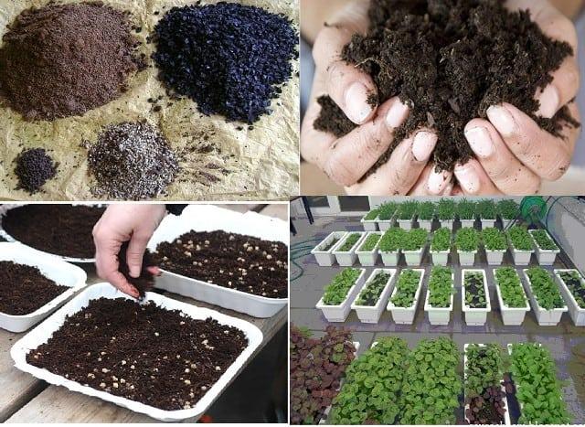 Hãy chuẩn bị khay nhựa hoặc thùng xốp và đất để trồng rau