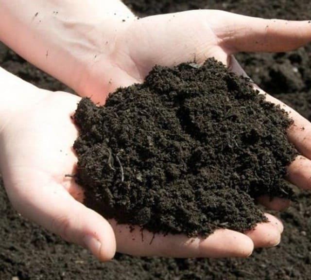 Đất tốt có vai trò vô cùng quan trọng cho sự phát triển của cây