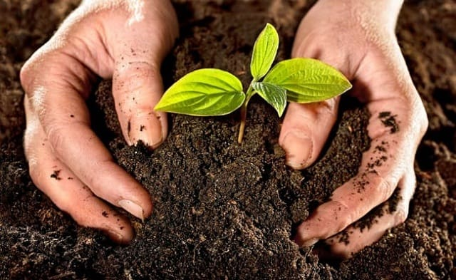 Đất trồng cây