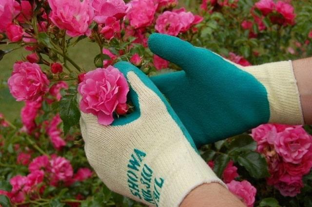 Dụng cụ làm vườn găng tay