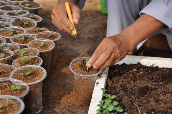 Giá thể xơ dừa trồng rau