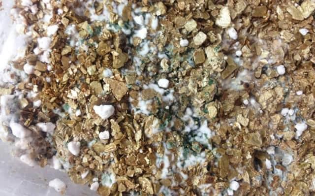 Học cách làm nấm trichoderma đơn giản và tiết kiệm.