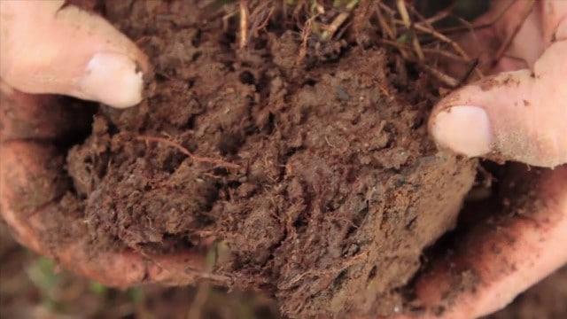 Học cách làm tơi đất sét để cải thiện chất lượng đất.