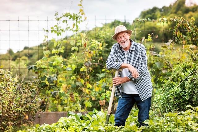 Làm vườn giúp giảm căng thẳng
