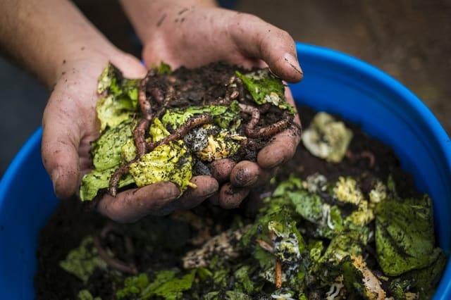 Lưu ý ủ phân hữu cơ
