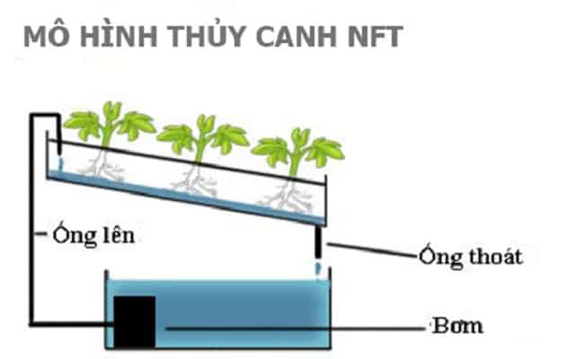 Mô hình thủy canh NFT