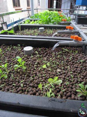 Mô hình trồng cây trên đất sét nung.