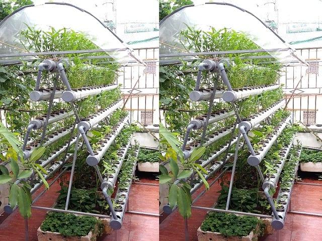 Mô hình trồng rau thủy canh hồi lưu tại nhà