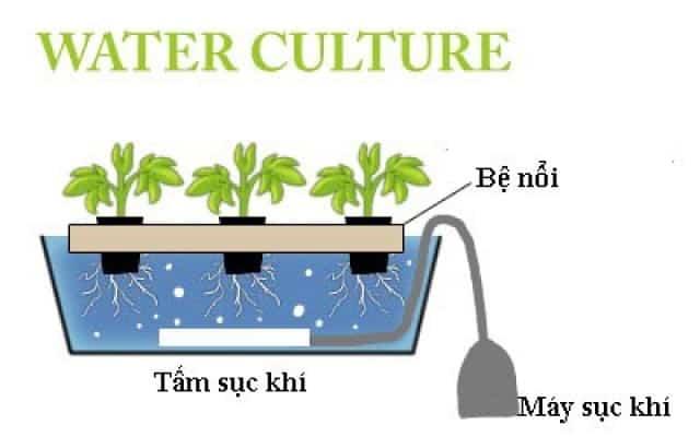 Nguyên lý hoạt động của giàn trồng rau thủy canh.