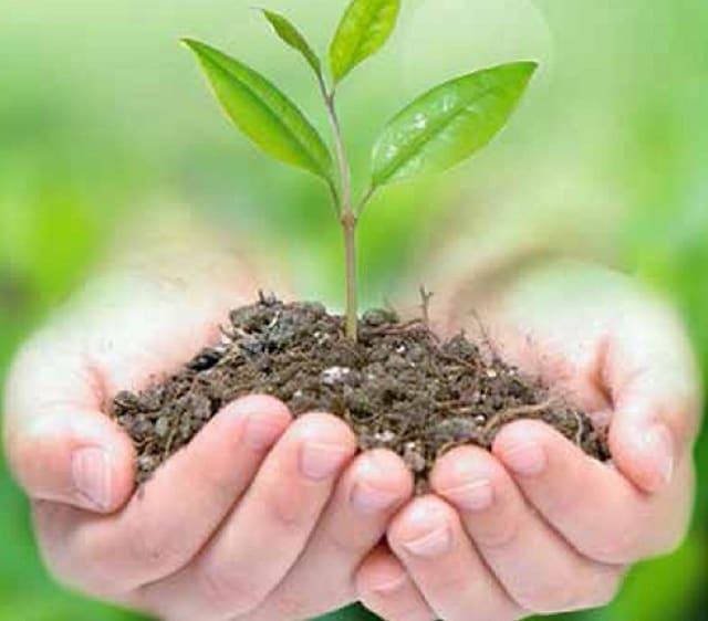 Phân bón ảnh hưởng đến cây trồng.
