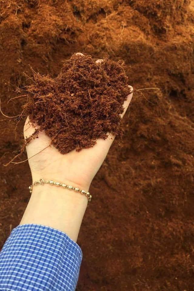 Xơ dừa có vai trò giữ ẩm và cung cấp vitamin